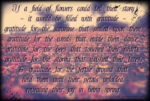 What I Know for Sure About Gratitude  - If a flower could tell their story in gratitude - adapted from Lucy Larcom