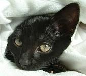 cat hiding under cover