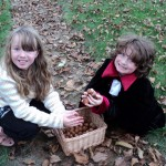 Walnut collecting: Collecting the walnuts is big fun!