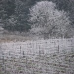 Country Mouse Visits the City for Christmas in the Northwest Wine Country