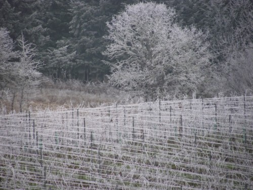 Frosty vines from Country Mouse Visits the City for Christmas
