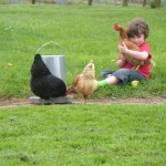 Playing with chickens