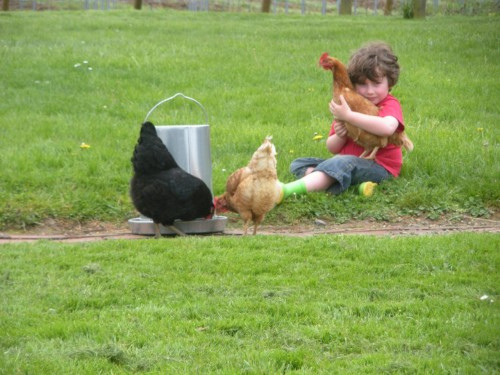 Quitting a dream while loving our chickens
