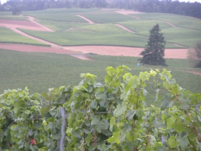 Living The Dream: Wine Country in the Heart of Willamette Valley