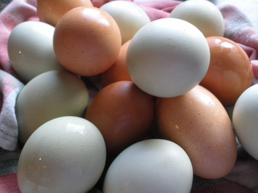 Living the American Dream: Farm fresh eggs