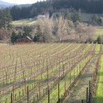How to Live in the Moment While Living the American Dream on a Vineyard
