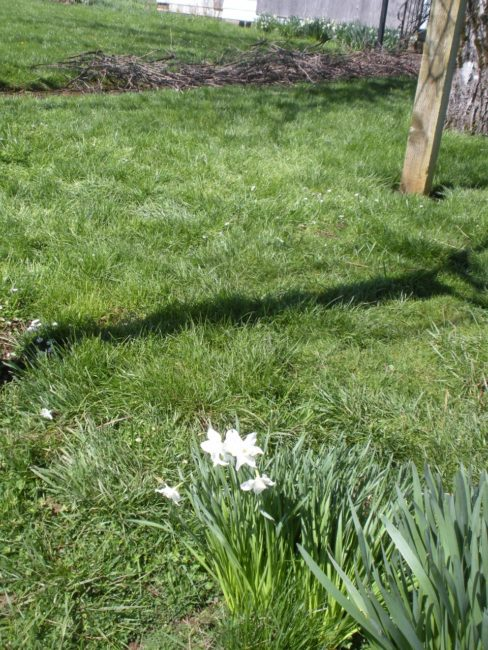 Dream Spring Living: Bundles and paperwhites in spring