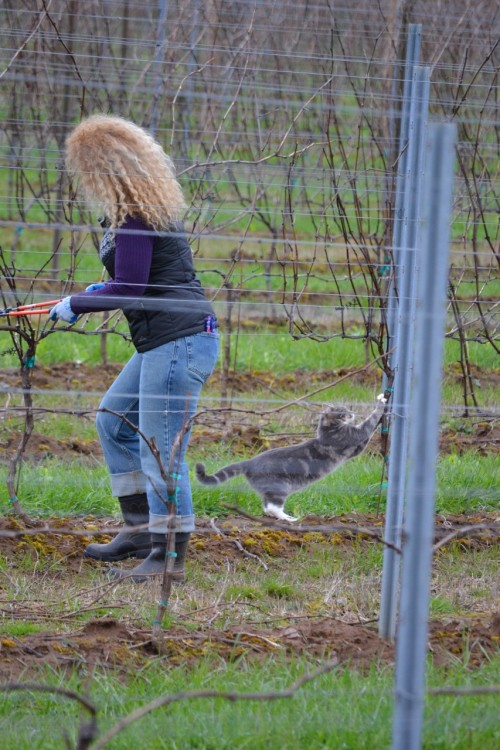 Quitting a dream over a vineyard cat