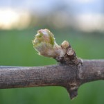 It's Spring for the American Dream in Willamette Valley