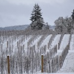Some Straight Talk About Winter Preparation When Living the American Dream