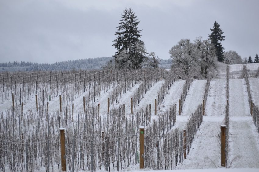 Preparation and Living the American Dream: Vineyard in Willamette Valley Snow