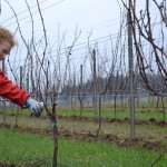How Pruning a Vineyard is Like Raising Children