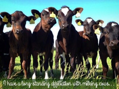 Food Entrepreneur: Seasoned Cookery School Cows