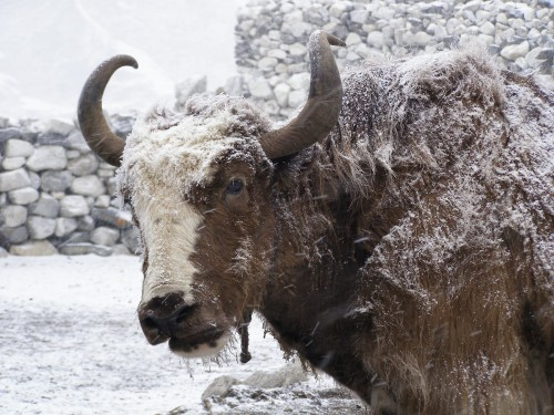 Best Hiking Travel Destinations: Gokyo-Valley-trek-Nepal