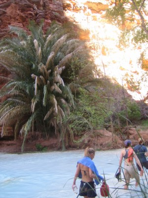 A Grand Canyon Travel Dream: Palm Trees in the Grand Canyon