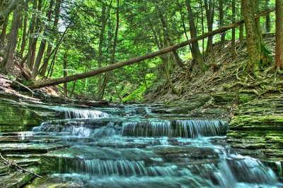 How Joy Can Lead Us To Our Dreams: Thacher Park Stream Albany, NY