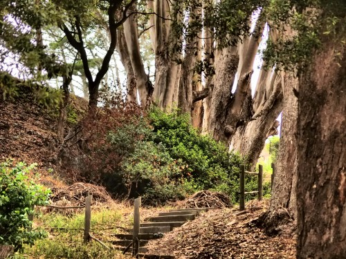 Wordless Wednesday Angel Island paths photography trips