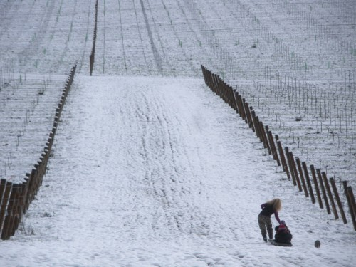 When Living the American Dream Heeds The Call of the Wild - Sledding in the snow in Willamette Valley Vineyards