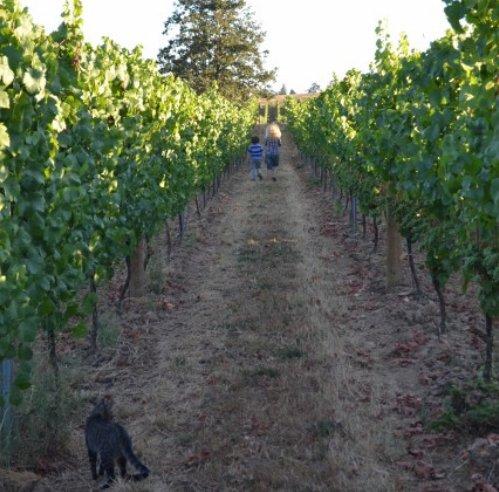 Dream gratitude among the vineyards