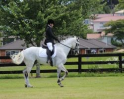 Top 8 Equestrian Websites and Blogs for Women Riders