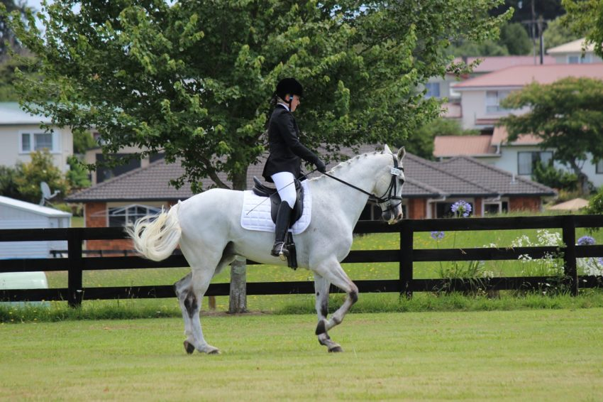 Top 8 Equestrian Blogs and Horse Websites