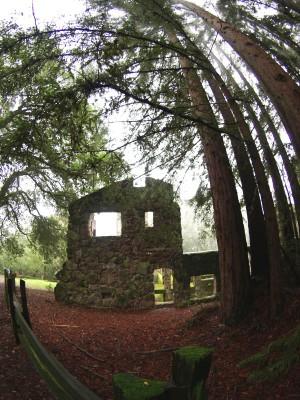 Wordless Wednesday: Fisheye Lens Inspiration at Jack London State Park