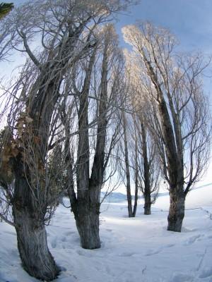Wordless Wednesday: Fisheye Lens Inspiration with Lake Tahoe snow