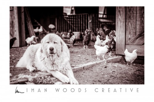 How to Heal with Photography: Working farm dogs