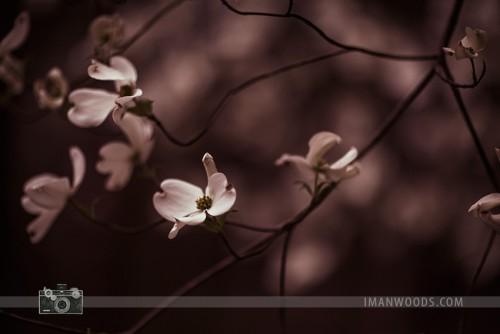 iman-woods-7338