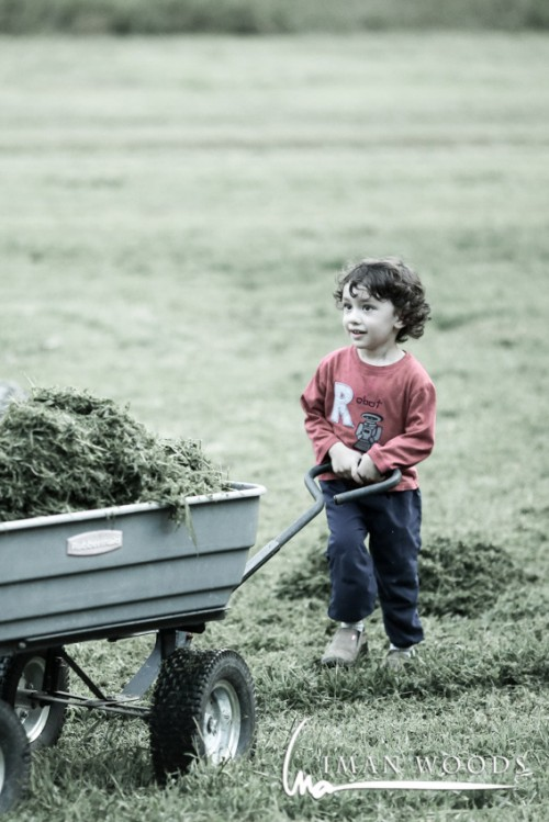 Helping on the farm. 5D Mark iii and 135mm F2L. The bokeh from this lens is creamy and jewel-like.