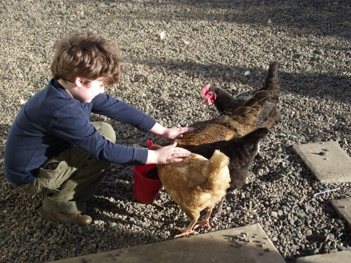 Live Your Dreams: Oregon free range chickens and my son