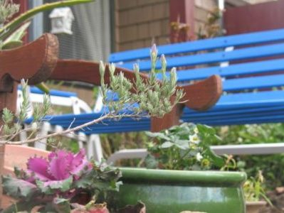 Procrastinating on Our Dreams My new Blue Garden Bench