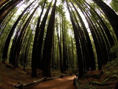Armstrong Grove Redwoods