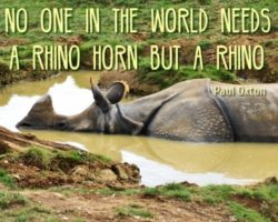 World Travel Dream: Visit Wildlife Park Rhino Africa Destinations