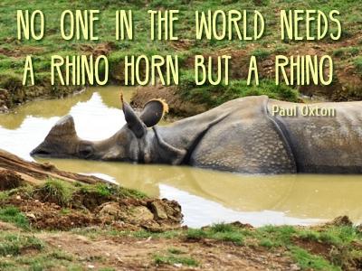 Wildlife Park Rhino Africa Destinations