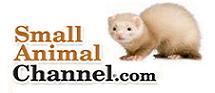 Small Animal Channel.com Ferrets USA Photo Contest 2012