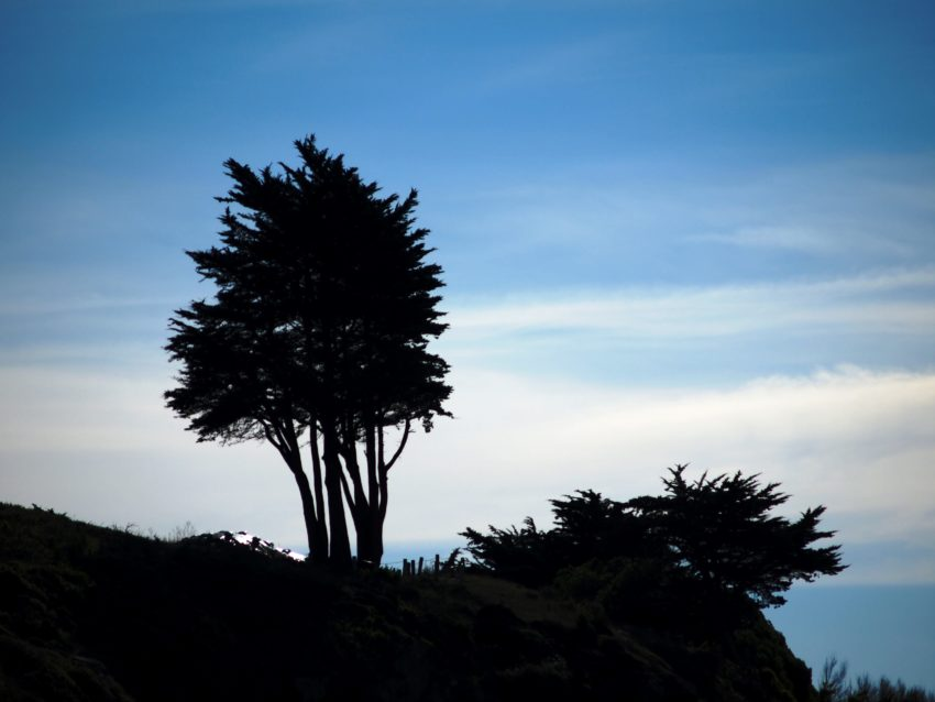 Wordless Wednesday: California Cypress Against Sky San Francisco Adventures