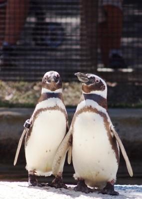 San Francisco Zoo photos: Penguins