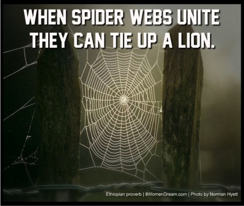 You Can't Do It Alone: When spider webs unite, they can tie up a lion quote